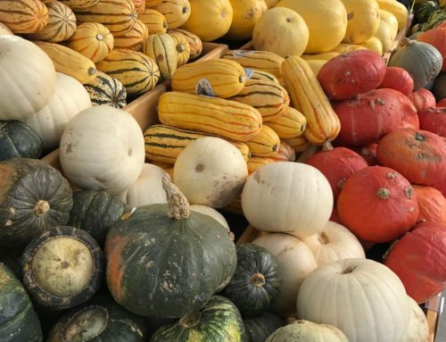 The Meg Approved Guide to Winter Squash